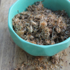 How to Make a Simple Arnica Tincture