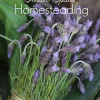 10 Tips for Small Space Homesteading