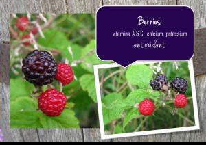 berries-1024x726