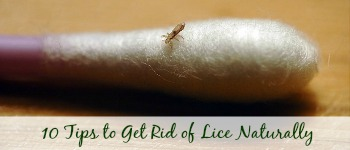 10 Tips to Get Rid of Lice Naturally 3