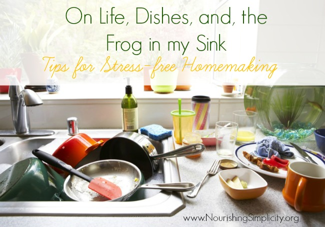 On Life, Dishes, and the Frog in My Sink
