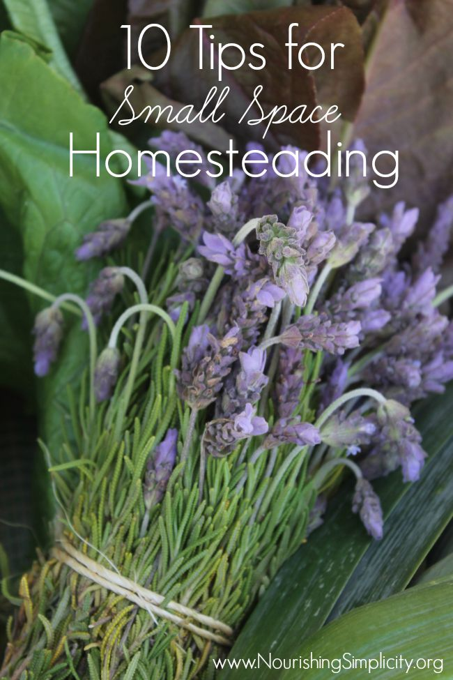 10 Tips for Small Space Homesteading-www.nourishingsimplicity.org