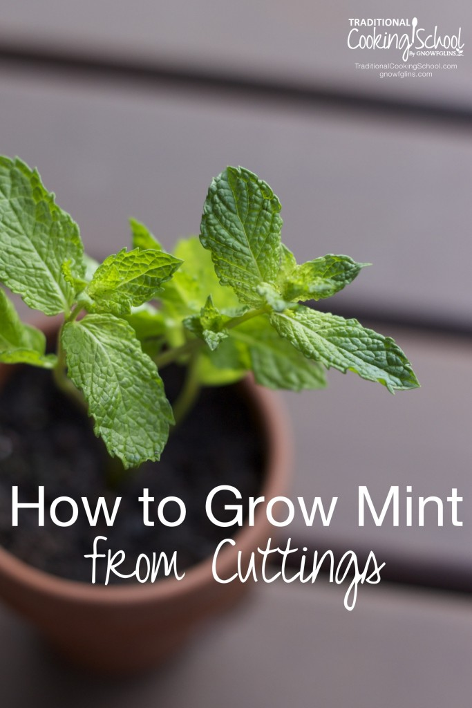 How to Grow Mint from Cuttings {2 Methods} -www.nourishingsimplicity.org